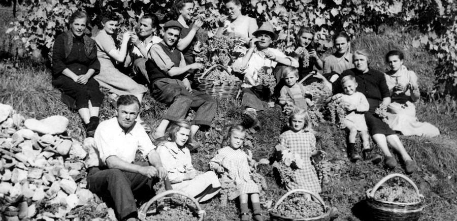 Equipe vendangeurs italie du nord 1960