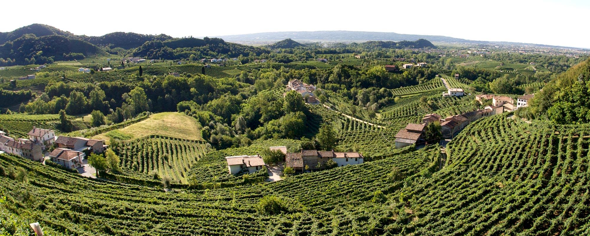 vigne prosecco conegliano italie