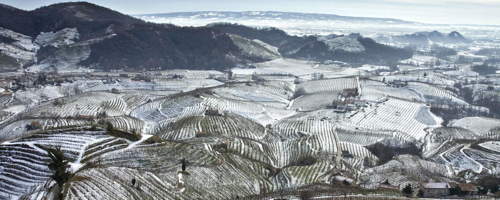 Colline prosecco en hiver - Valdobbiadene