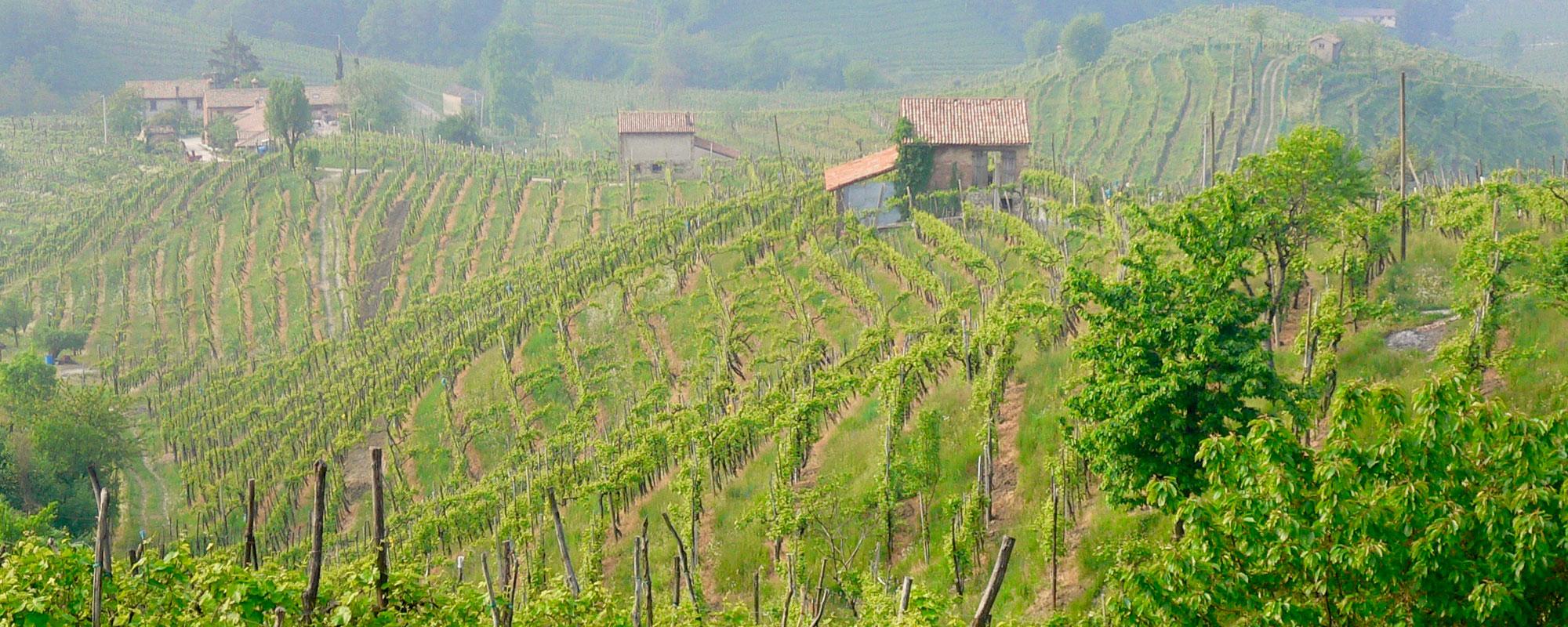 vignoble de Conegliano Valdobbiadene printemps