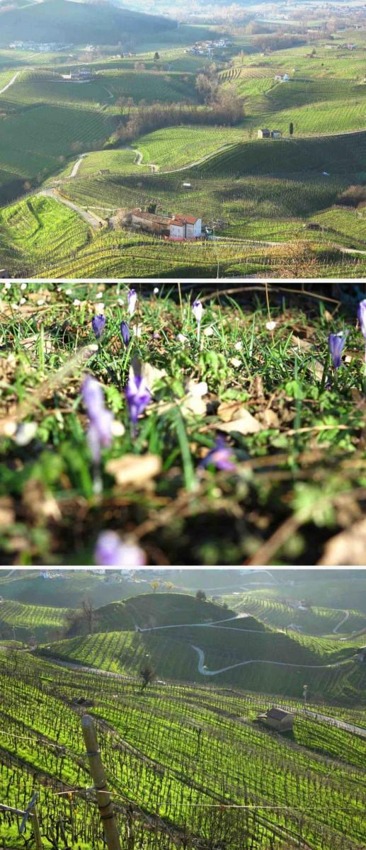 Le printemps dans les collines du Dans les collines du Prosecco Superiore