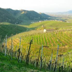colline-Conegliano-Valdobbiadene