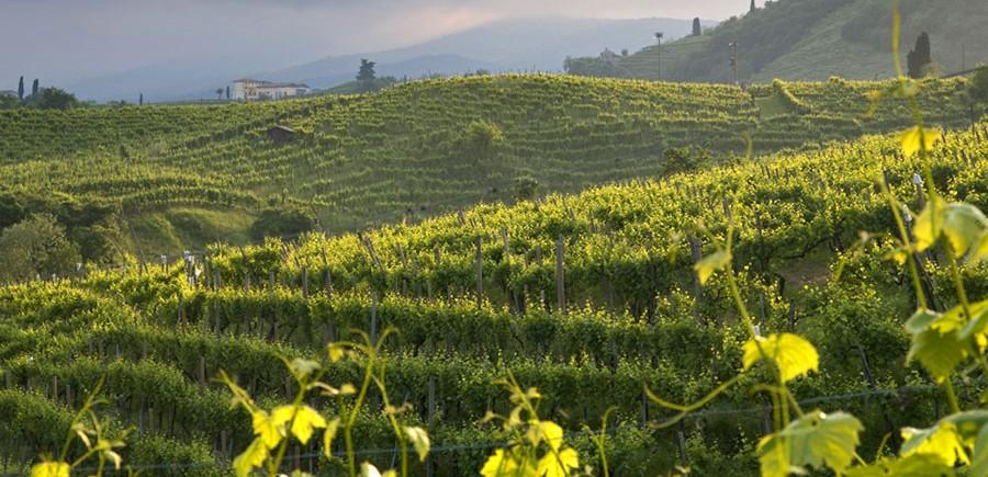 Avant première on vous dit tout sur le vin pétillant italien 2014