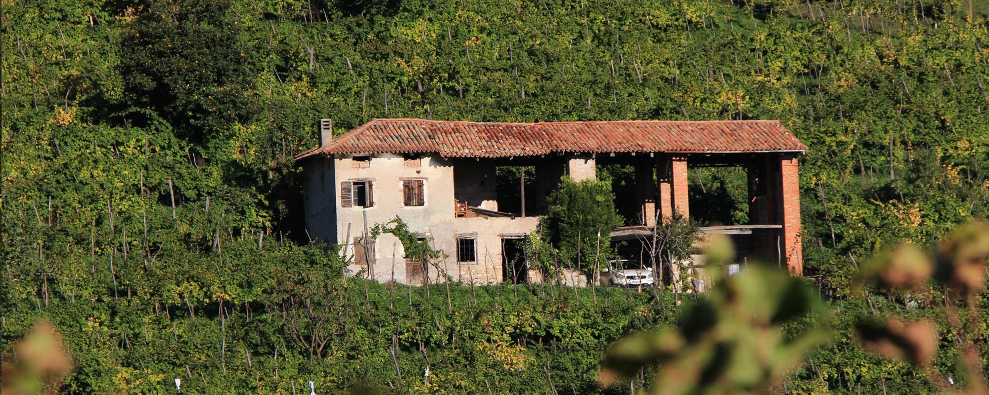 prosecco-automne-vignes