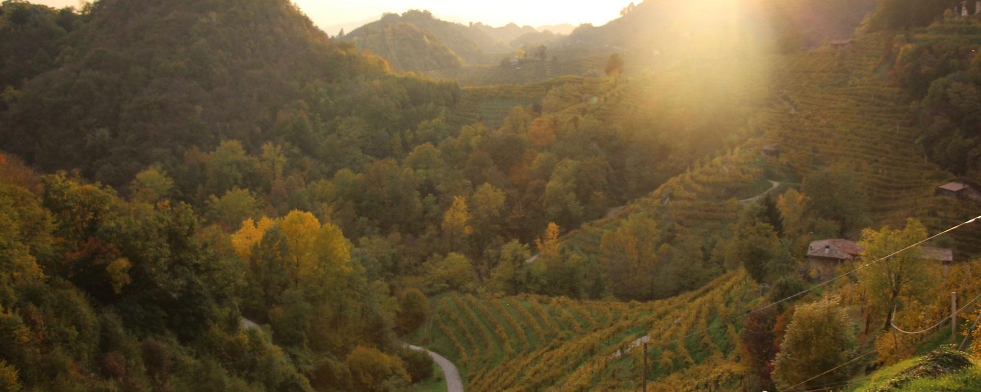Vignobles à Conegliano Valdobbiadene en automne